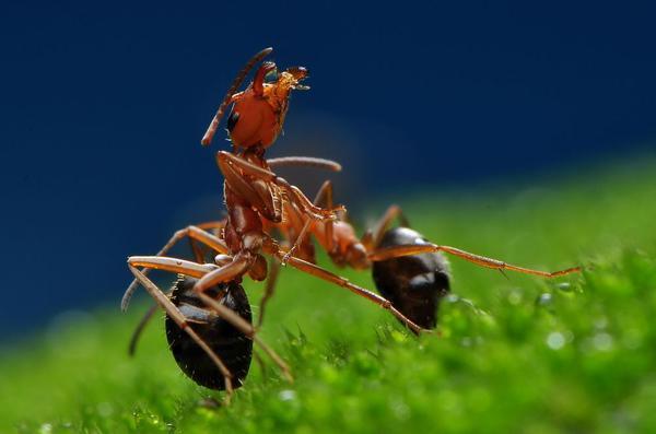 温馨一家--蚂蚁