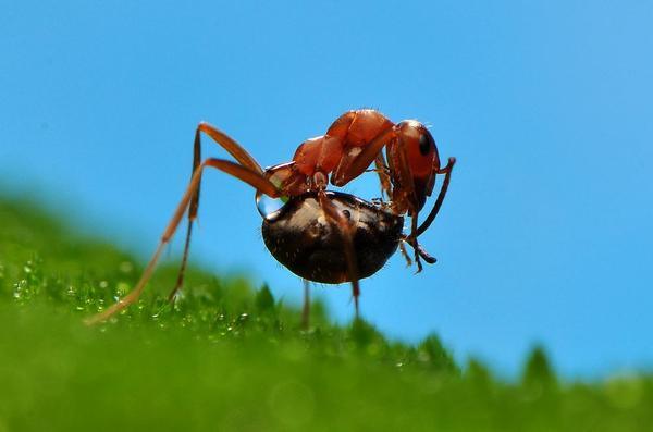 温馨一家–蚂蚁